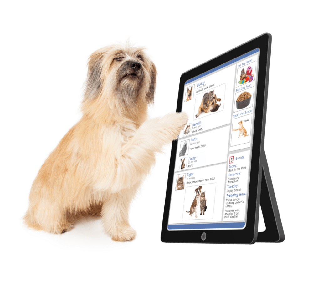 Dog with Tablet - Why Software Wants to Get a Little More Personal